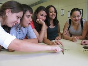 Os estudantes do Amorim Lima brincam com o exótico bicho-pau, na Estação Ciência